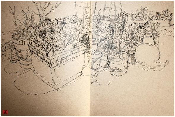 pounce_garden