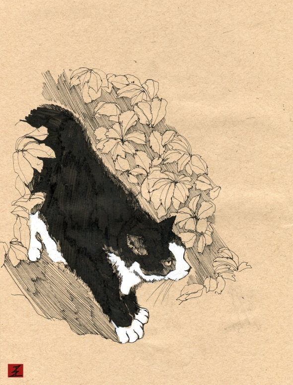 harold_cat