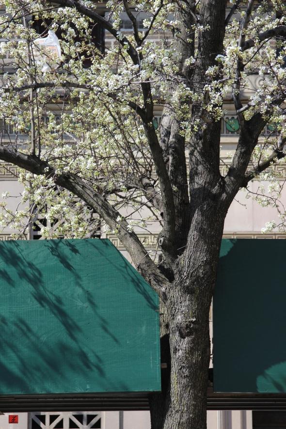 photo_spring1