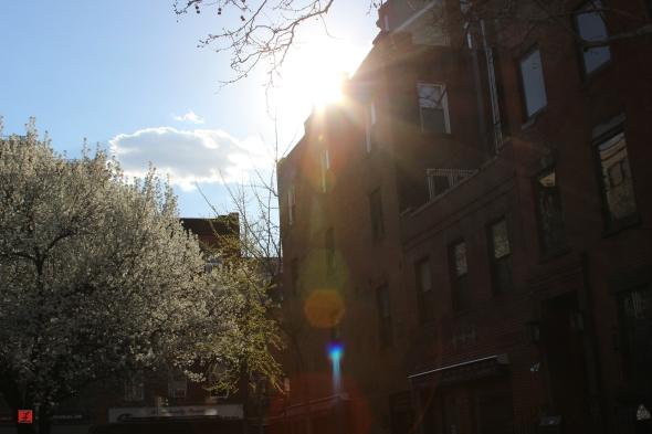 photo_spring2